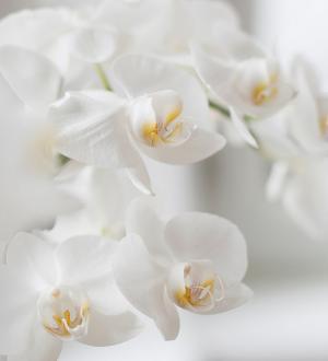 Hotel Gasthof zur Post Orchidee Wellness